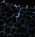 Linea 5. Approcci molecolari e cellulari allo studio e cura delle malattie metaboliche e cardiovascolari